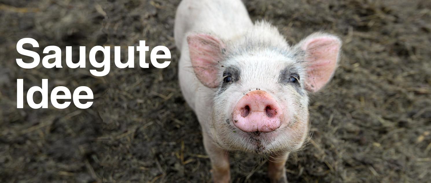 Ein Schwein schenkt Chancen!