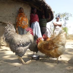 Hühnerschar (Ostern)