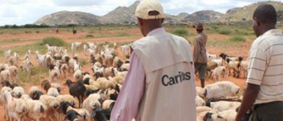 Schafe und Ziegen spenden