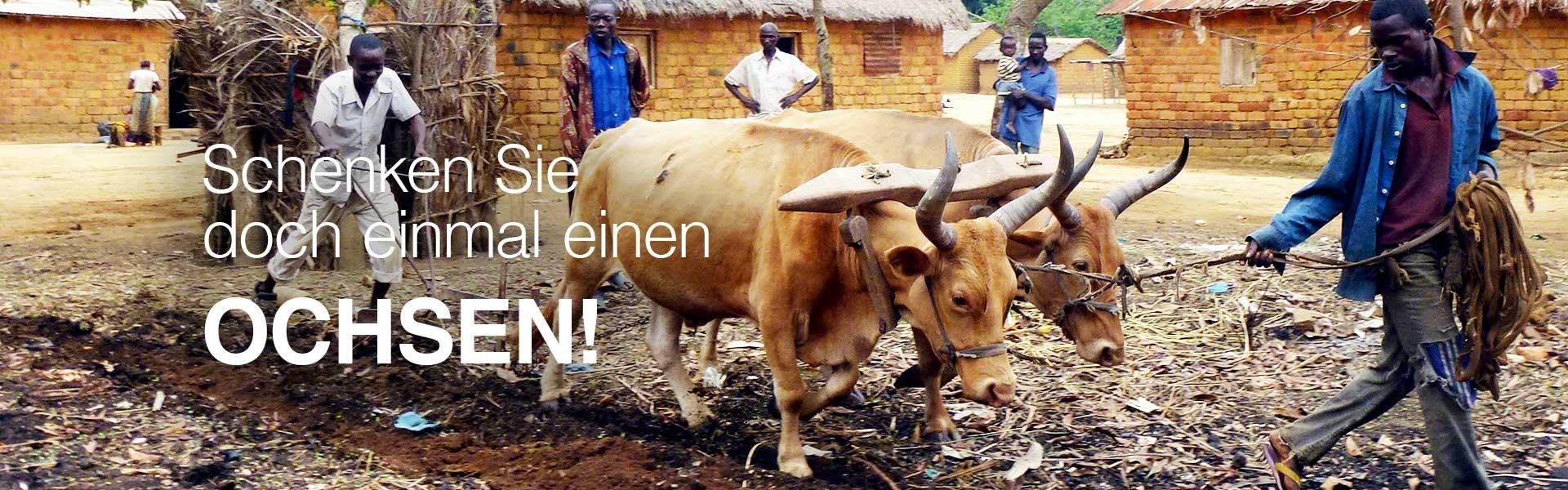 Ein Ochse für eine gute Ernte