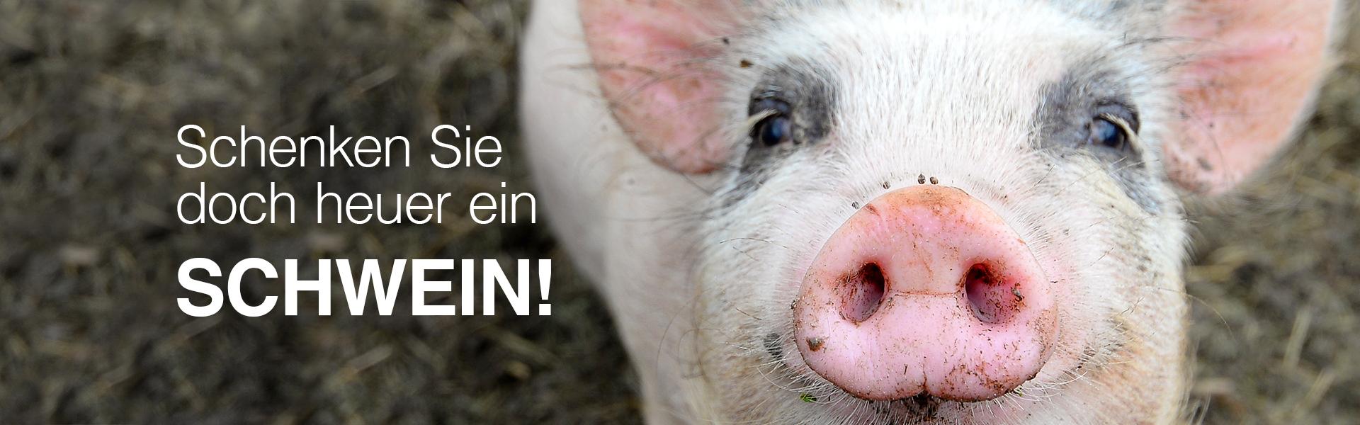 Ein Schwein schenkt Chancen
